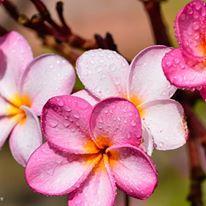flower at amritapuri ashram