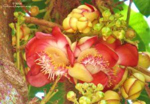 red flower at ashram orchid