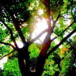 Amma's Green Initiatives