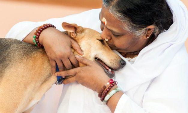 Amma and the Rabid Dog