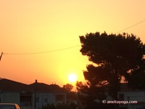 tree shadow at sunset