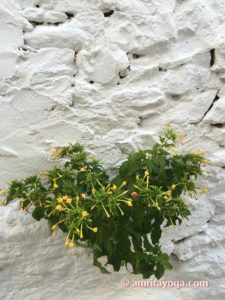 plant growing on white wall