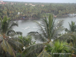 Amritapuri ashram backwaters with palm tree