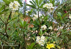 amritapuri ashram flowers trees