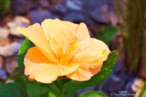 ashram orange flower