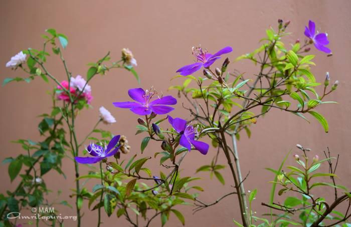 blue flowers watermarked