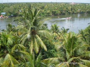 Palm trees near Amritapuri Ashram