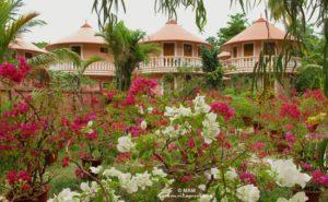 flowering plants at amritapuri ashram