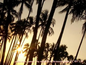 dark palm trees in sunset