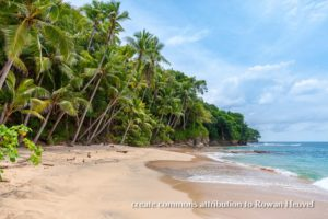 tropical beach with sand and ocean amritapuri