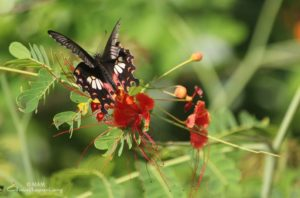 amrita yoga butterfly with red flower
